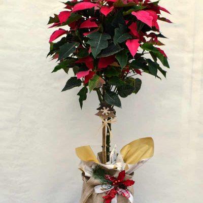 Poinsettia árbol navidad