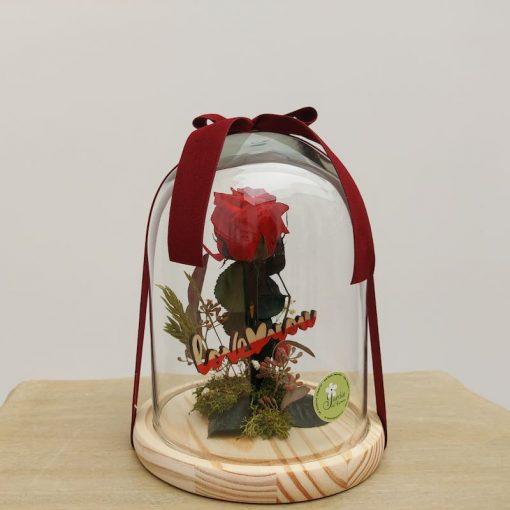 Rosa preservada en cúpula